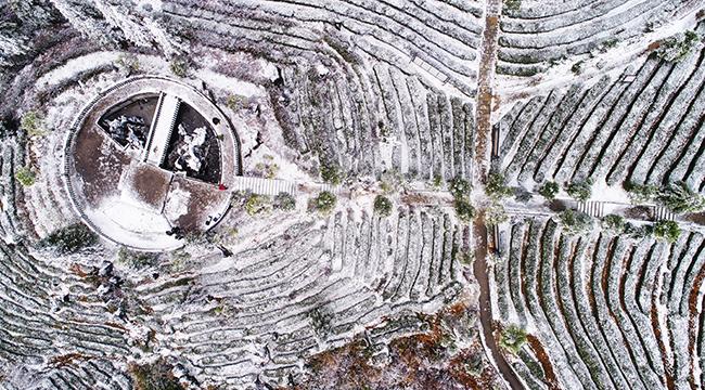 航拍重庆酉阳3000亩茶山落雪