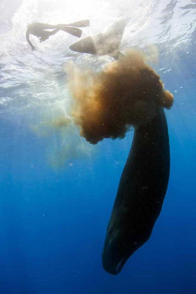 抹香鲸大便如 深水炸弹 威力巨大