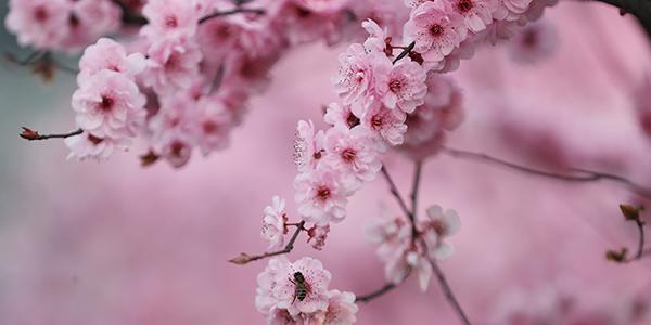 【图解】春分丨春暖花开 收下这份养生攻略