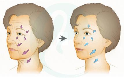 面部设计分析图