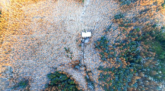"""航拍山王坪:四十年植树造林造出万亩""""森林梯田"""""""