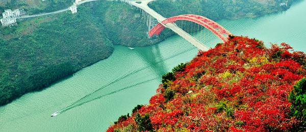 重庆冬日美景:巫山红叶映三峡