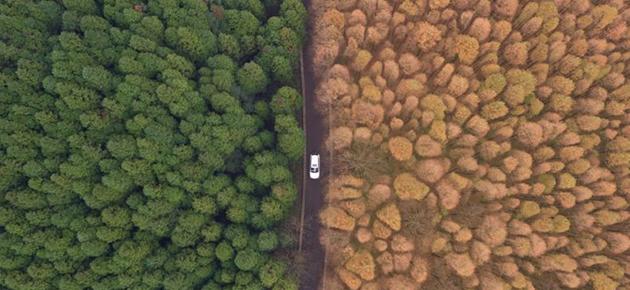 重庆初冬层林尽染