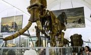 探訪聖彼得堡動物博物館