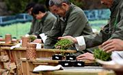 杭州舉行龍井茶技藝大賽