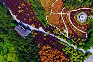 航拍五洲园特色苗木种植基地