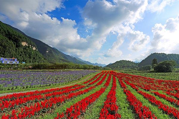 這個端午去哪兒? 重慶市農委推薦40條鄉村小長假精品線路