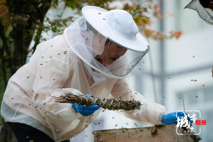 割蜜是一項技術活,需提前準備好割蜜刀,壓蜜器和盆,戴好防護面罩。正式割蜜之前,還需要點燃艾葉扎成的棒來驅趕蜜蜂,以免被蜜蜂蜇傷。新華網 李相博 攝