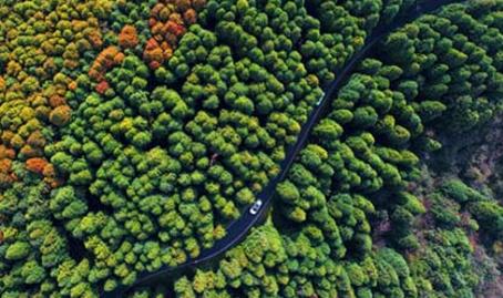 航拍山王坪生態公園 生態石林醉遊人