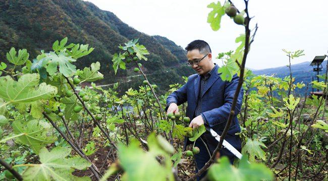 綠水青山,大有可為 十九大代表楊大可帶領父老鄉親奔小康