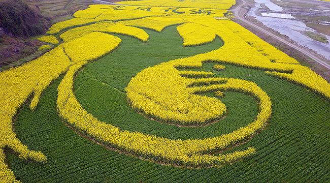 無人機之旅 春回大地滿目綠 鳥瞰重慶萬畝油菜花田