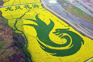 春回大地滿目綠 鳥瞰重慶萬畝油菜花田