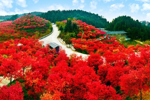 三月也能賞紅楓 巴南五洲園今日開園