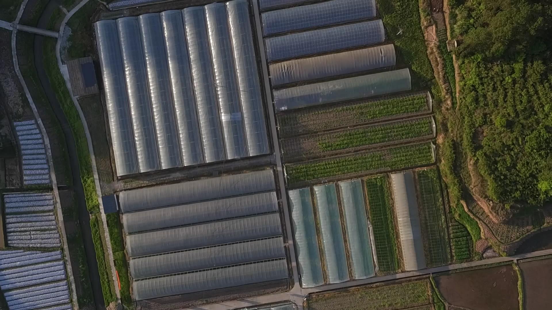鳥瞰騰春蔬菜專業合作社300畝大棚蔬菜園地