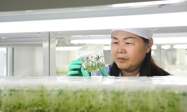 重庆巫溪:技术提升助力马铃薯产业发展