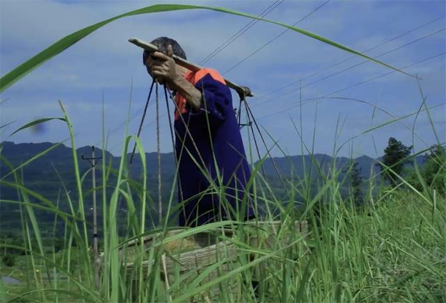 """""""芒種""""也稱""""忙種"""" 是農民播種、下地最為繁忙的時機"""
