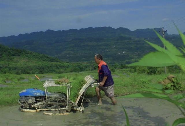 熟練的插秧機手 一天最多能栽十八畝地