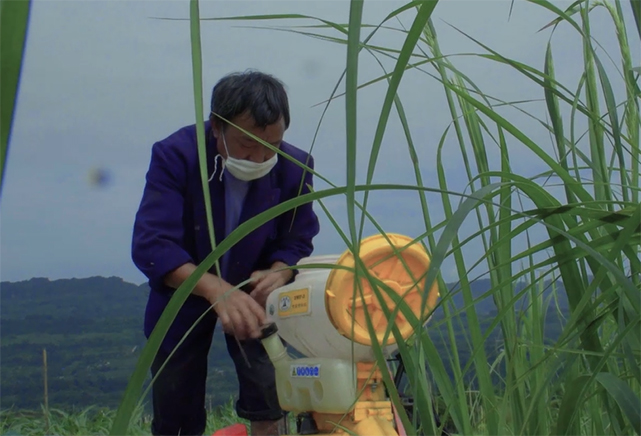 栽秧前先噴一遍除草劑 雜草才不會和秧苗搶營養