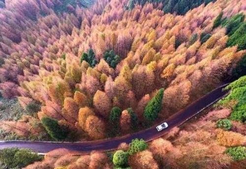 这5条线路串起了美好的重庆秋景
