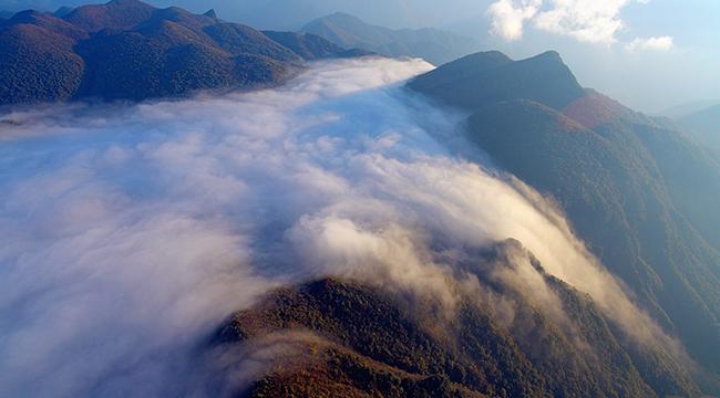 无人机航拍秋日红池坝 秋染群山云海如瀑