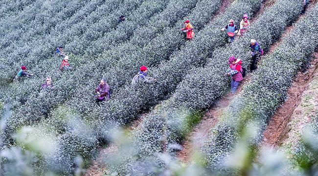 重慶南川:雨水至 農事忙