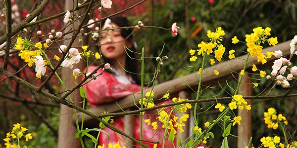 重慶:桃花盛開 踏青賞花到南山