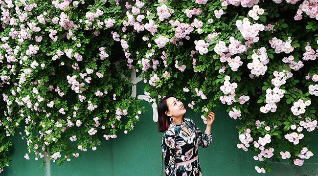 薔薇花裏,你笑的樣子真美!