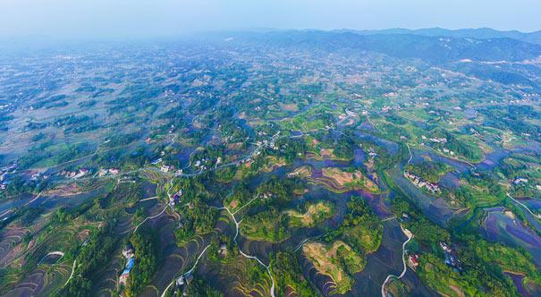 重慶梁平43萬余畝稻田播種希望 綠意盎然畫美景
