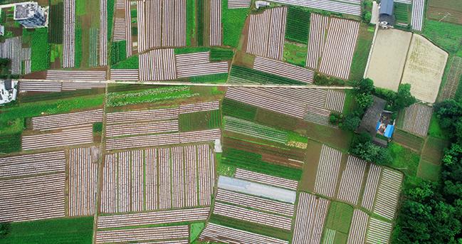 航拍重慶綠色有機蔬菜基地 繪就致富畫卷