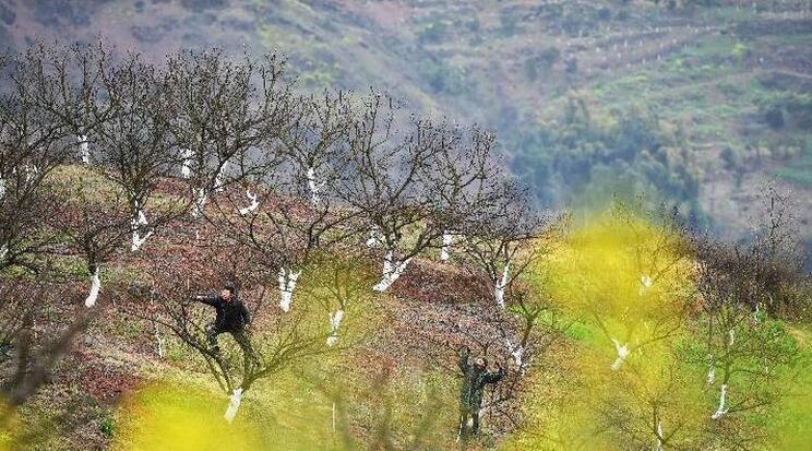 三峽庫區開啟綠色發展蝶變
