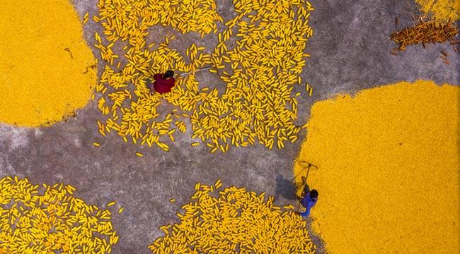 重慶梁平:玉米豐收 農民晾曬忙