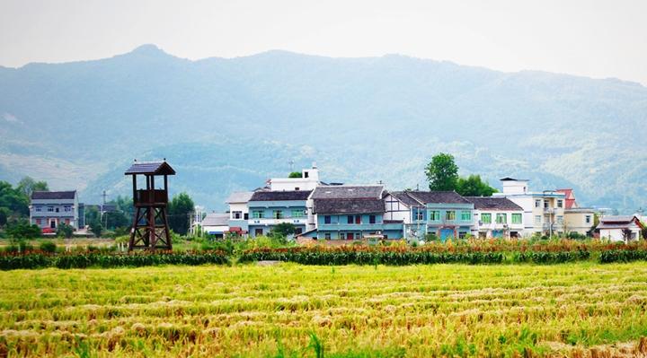 重慶墊江:金秋田園種希望