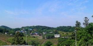 九龍坡:廚余化成水 荒山變園林