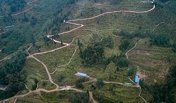 酉陽車田鄉小寨村油茶種植基地