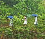 綦江:醫衛體制改革讓優質醫療資源普惠于民