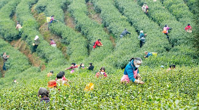 重慶南川:不負農時不負春