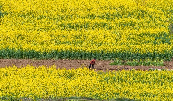 防控不放松 農事不耽誤 南川區全力做好春耕備耕工作