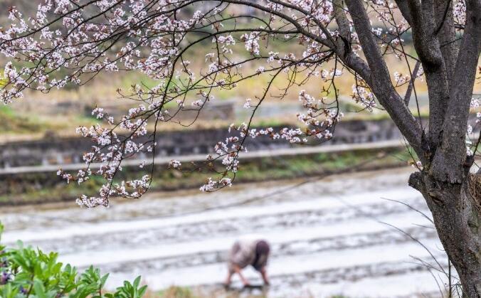 重慶南川:春光好 勞作忙