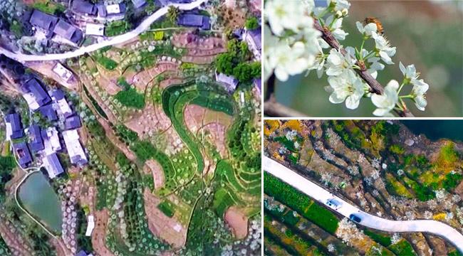 陽春三月,重慶巫山漫山春雪映巫峽