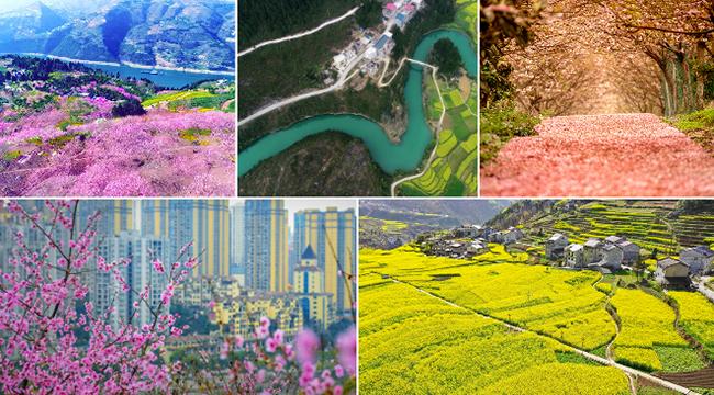春分| 十張圖片告訴你:山城無處不飛花!