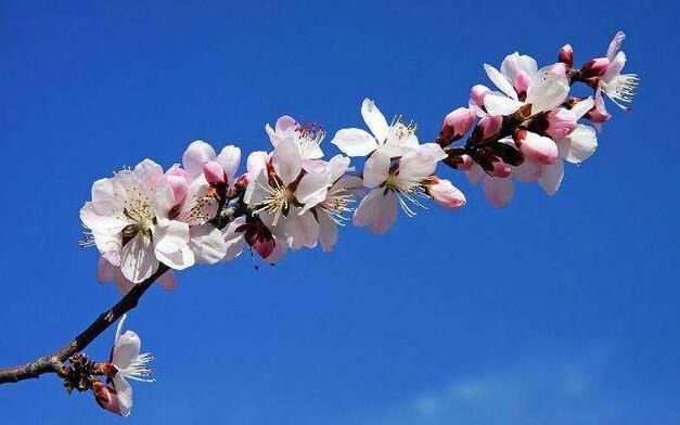 《盼春來——致敬抗擊新冠病毒一線的白衣戰士》