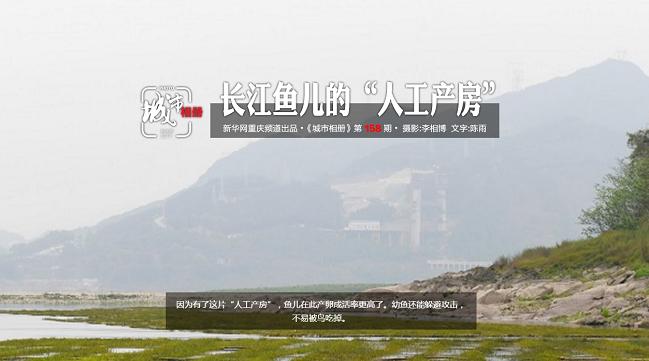 """長江魚兒的""""人工産房"""""""