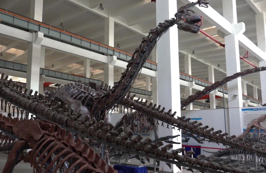 恐龍研究有很高的社會價值和經濟價值