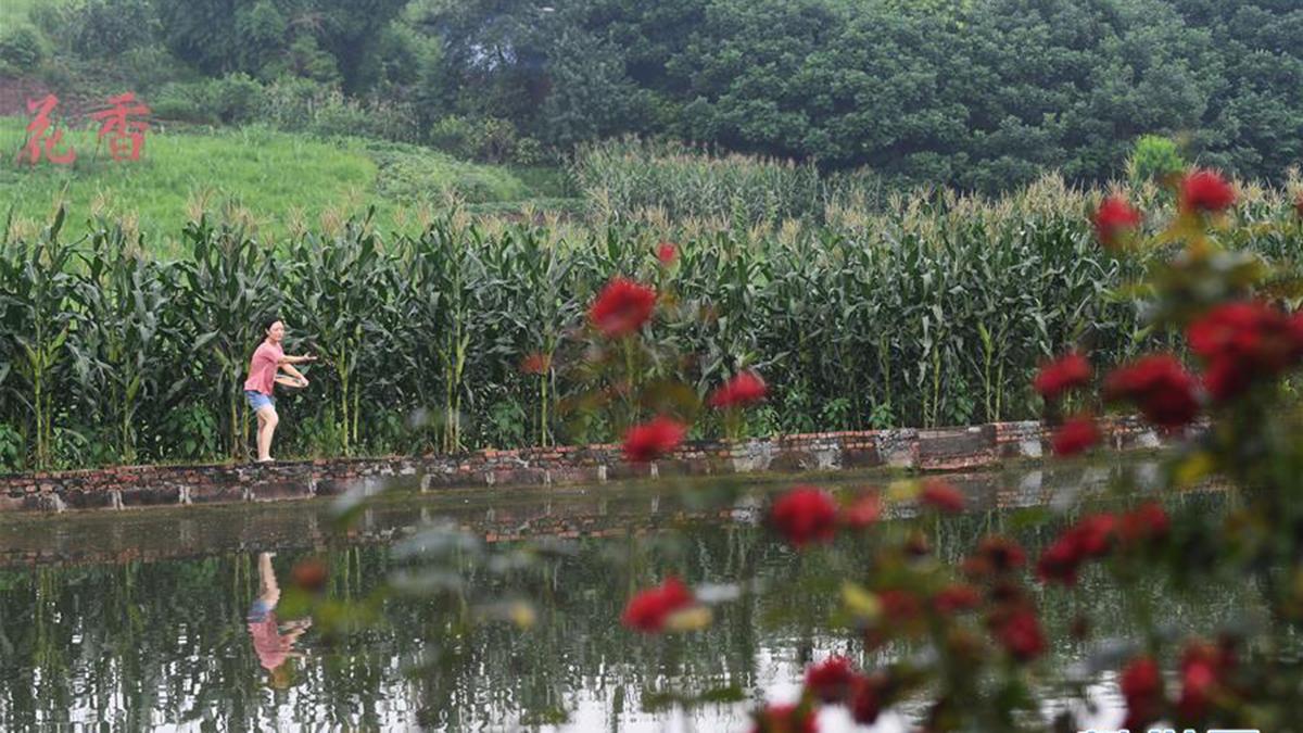 重慶永川:多措並舉改善農村人居環境