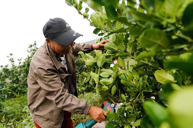 智慧農業的布局需要考慮三方面因素