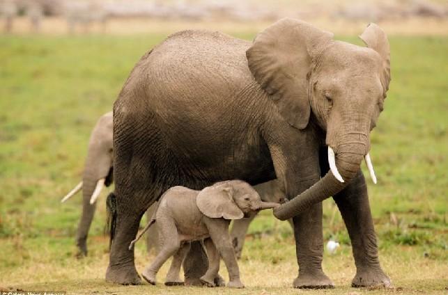 动物世界亦温馨 浓情母爱令人动容