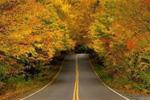 震撼眼球的世界最美林蔭大道