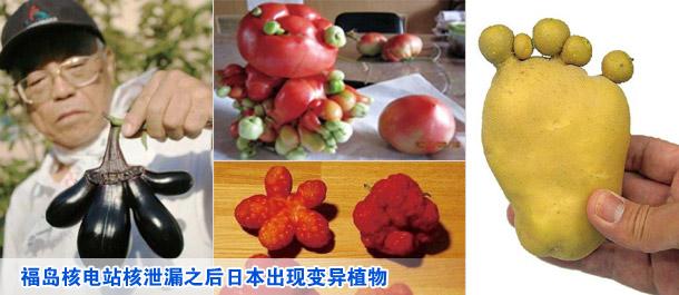 福岛核电站核泄漏之后日本出现变异植物