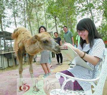郑州一高校将动物模特请进校园