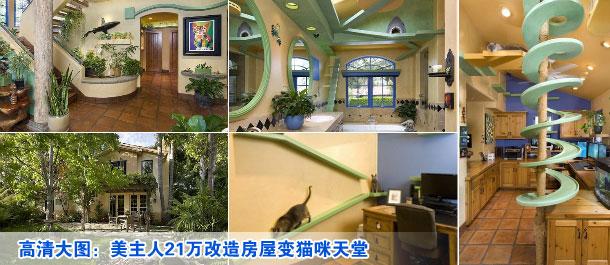 猫房子设计图片